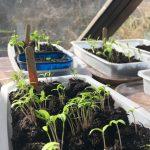 Ecotruc #1 : évolution des semis !