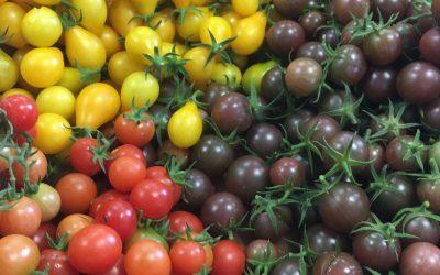 Des tomates de toutes les couleurs