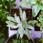 Tutos: les problèmes courants de vos plantes